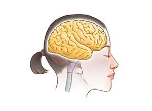 頭蓋骨のイメージ