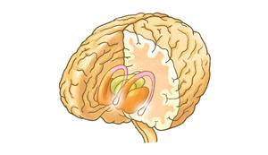 扁桃体のイメージ