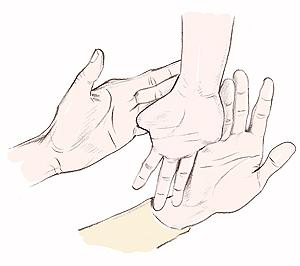 手のひらファルゴン