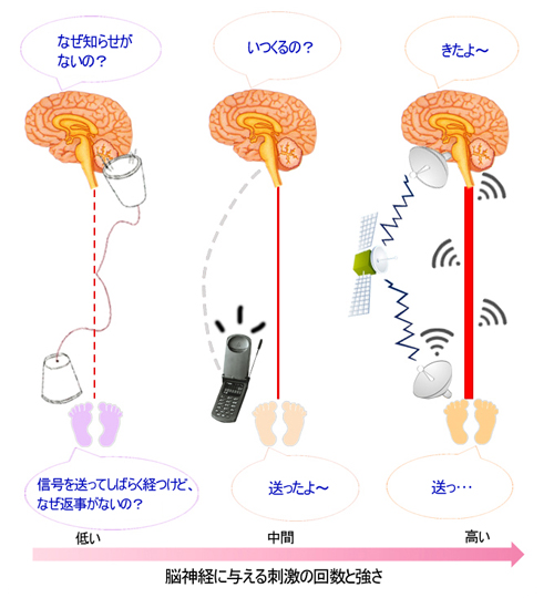 イルチブレインヨガの脳トレーニング